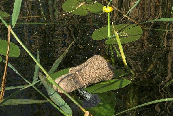 Hier hat sie ihre Socke auf ein Teichrosenblatt gelegt und sich ins Wasser begeben. Es ist ihr eindeutig zu nass.