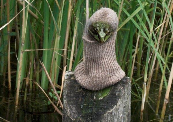 Die Kröte hockt in ihrer Socke auf einem Holzpfahl, der aus dem Wasser ragt. So wird sie nicht nass.