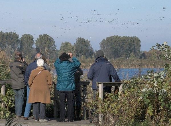 Schaulustige beim Vogelbeobachten.
