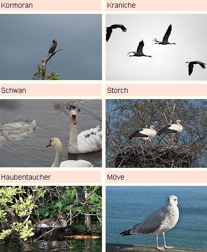 Fotoarchiv - Fauna - Vogel