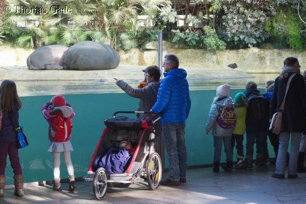 Dicht bei den Flusspferden