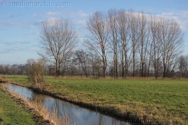 11. 1. 2014. Brandenburg. Rhinluch bei Linumhorst. Feuchtwiesen. Entwässerungsgraben