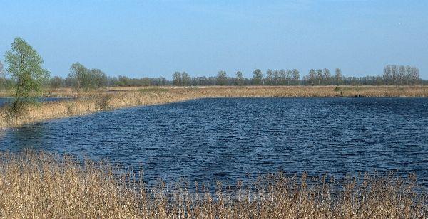 10. 4. 2009. Brandenburg. Linum. Rhinluch. bekannt als Storchendorf. Teiche mit Schilfgürtel